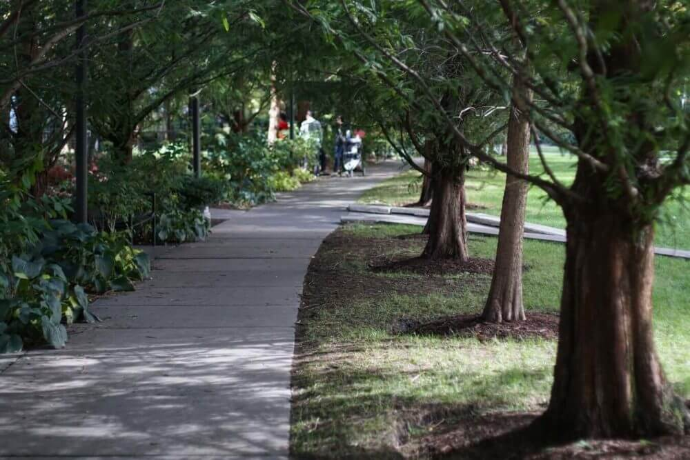 line of trees in the park